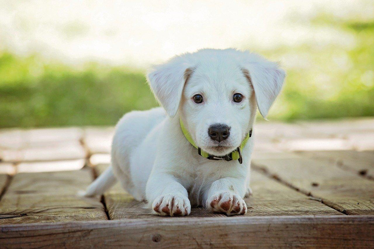 entretien du chien : comment s'y prendre
